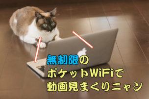 無制限ポケットWiFiを使いこなす猫
